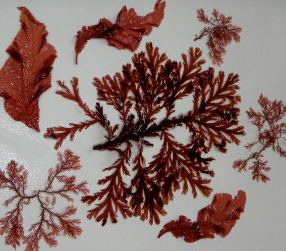 various seaweeds